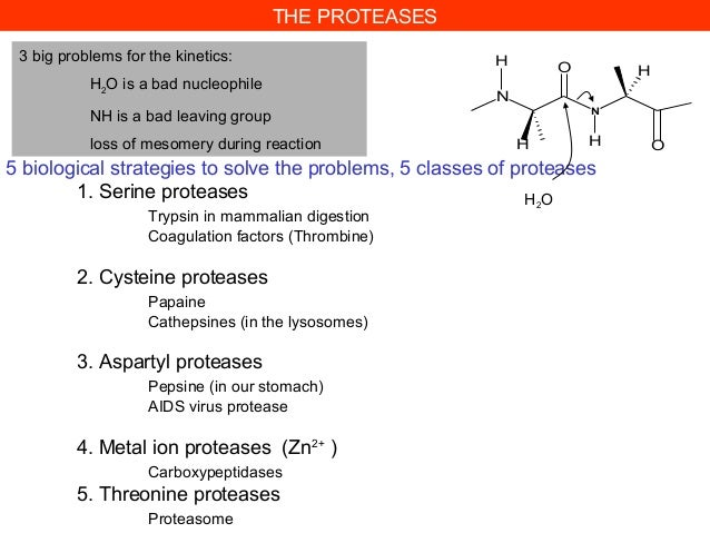 5 biological strategies to solve the problems, 5 classes of proteases1. Serine proteasesTrypsin in mammalian digestionCoag...