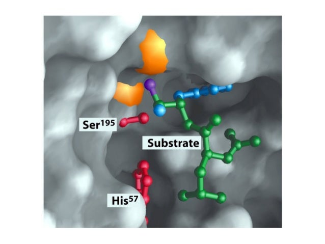 The C-terminal part of thesubstrate dissociated andleaves the Acyl-enzyme