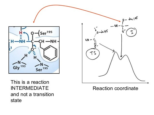 """Reaction mechanism of a serine protease(in this case, subtilisin)Note the three residues of the """"catalytic triad"""": Ser221,..."""