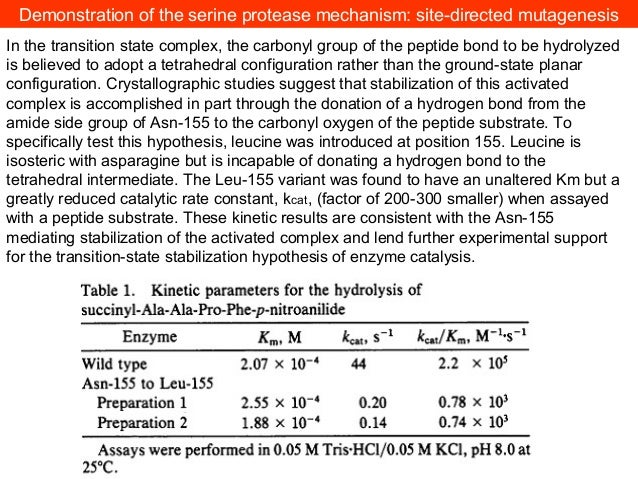 Can proteases be used for protein SYNTHESIS?CHEMICAL ligation
