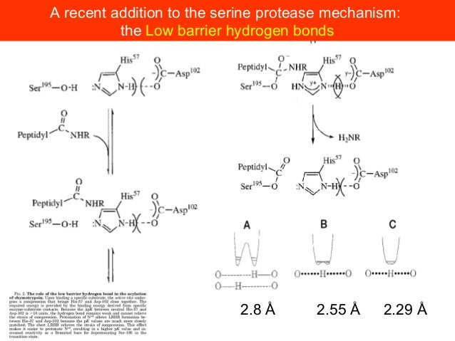 Kaiser and co-workers demonstrated the practicality of this workby preparing a subtilisin variant, thiolsubtilisin, where ...