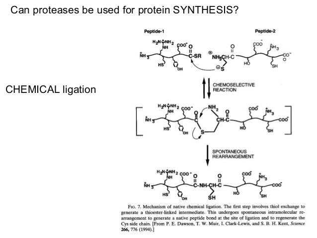 Protease from AIDS virus: an aspartyl protaase3. Aspartyl proteases