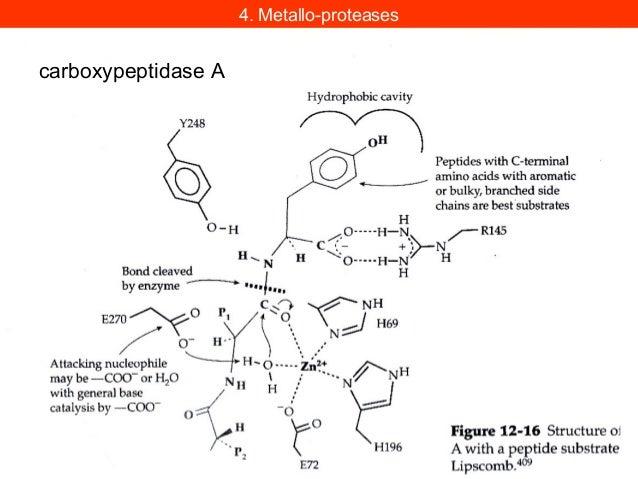 Une des composantes de la tri-thérapie est un inhibiteur de laProtéase du virus du SIDA, un analogue de l'état de transiti...
