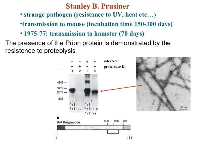 Stanley B. Prusiner• strange pathogen (resistance to UV, heat etc…)•transmission to mouse (incubation time 150-300 days)• ...