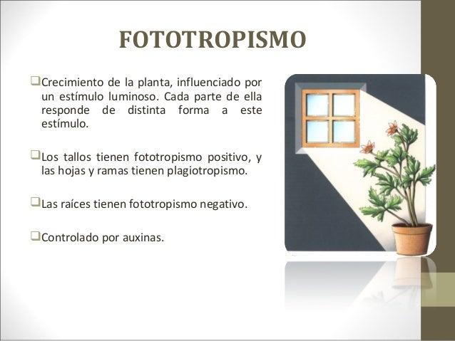 Que es fototropismo y ejemplos 63