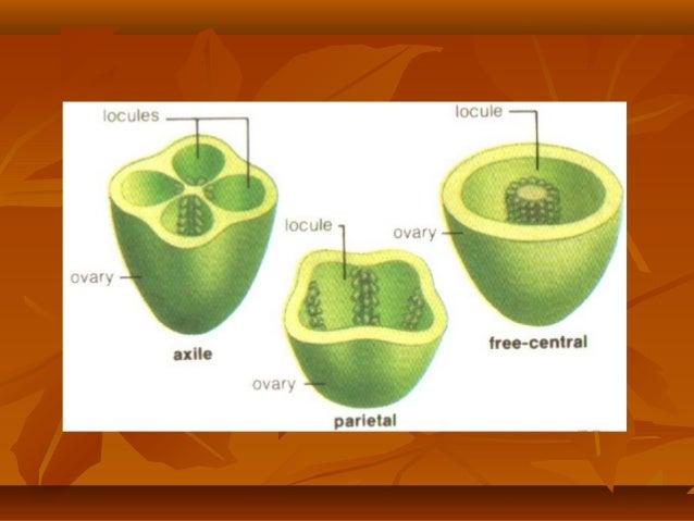 Ppt morfologi tumbuhan simetri bunga rumus bunga dan diagram bunga 6 rumus bungarumus bunga ccuart Gallery