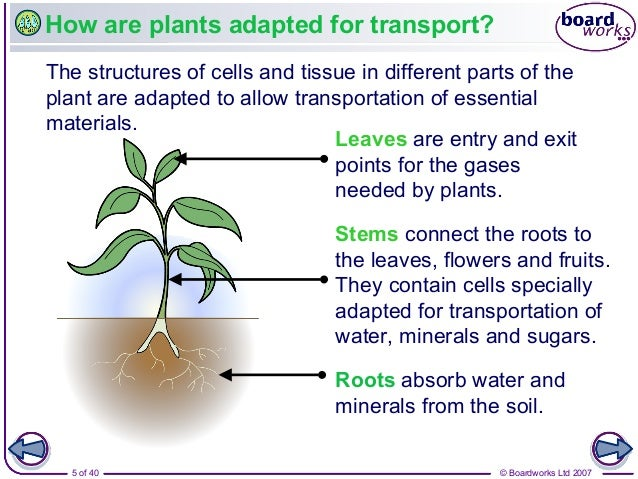 Transport in plants for Different parts of soil