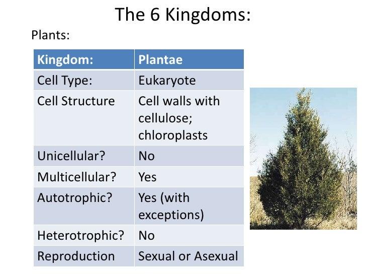 Genus Juniperus 15
