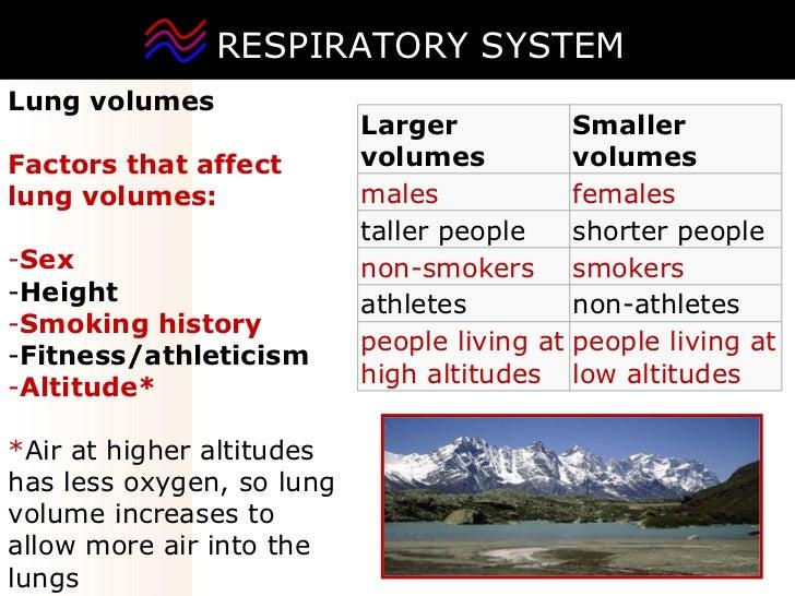 RESPIRATORY SYSTEM <ul><li>Lung volumes </li></ul><ul><li>Factors that affect lung volumes: </li></ul><ul><li>Sex </li></u...