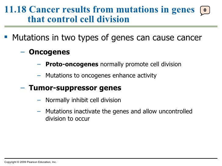 11.18 Cancer results from mutations in genes that control cell division <ul><ul><li>Mutations in two types of genes can ca...