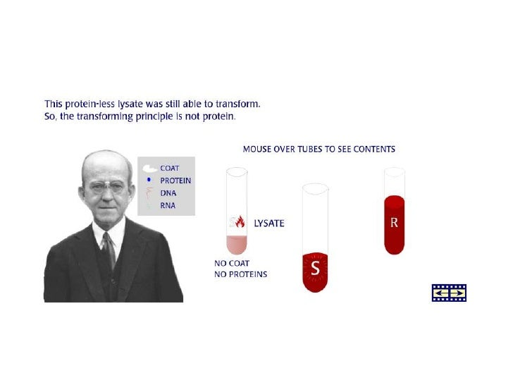 3) The Hershey-Chase's bacteriophages                 experiment• Bacteriophages  – viruses that infect bacteria  – consis...
