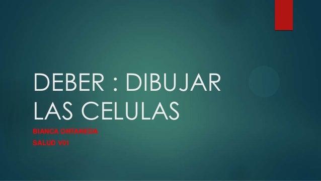DEBER : DIBUJAR LAS CELULAS BIANCA ONTANEDA SALUD V01