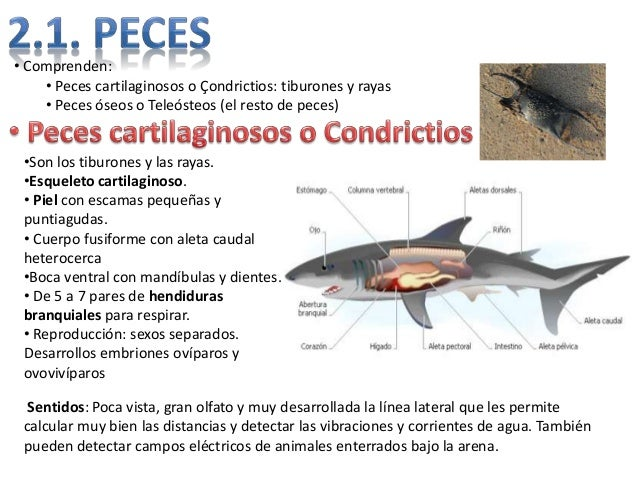 12 animales vertebrados for La reproduccion de los peces