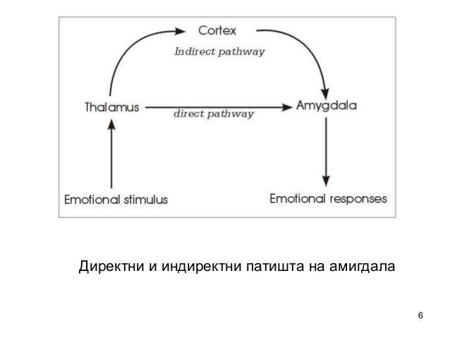 6  Директни и индиректни патишта на амигдала