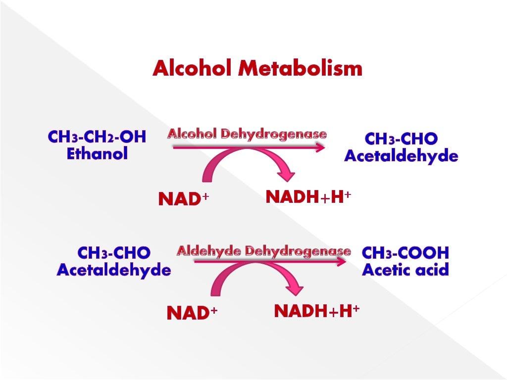 10 Señales De Que Tienes Un Metabolismo Lento