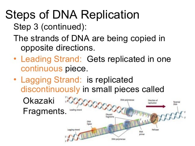 12.2 replication of dna
