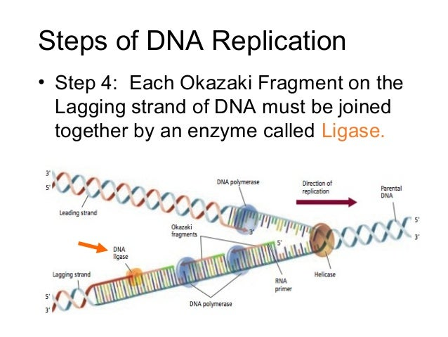12 2 replication of dna