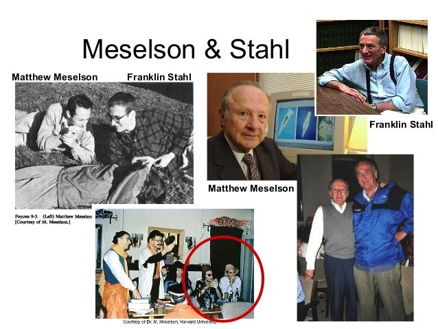 Meselson–Stahl experiment