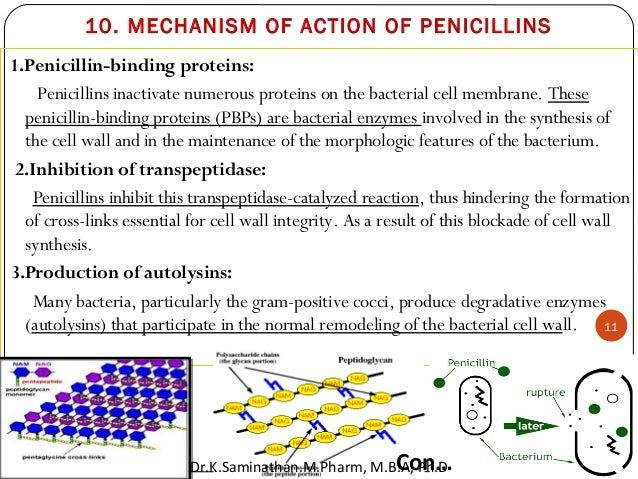 this is a essay about penicilline The chemical structure of penicillin was determined between 1942 and 1945 under conditions of secrecy established by the us and uk governments the evidence was not published in the open literature but as a monograph.