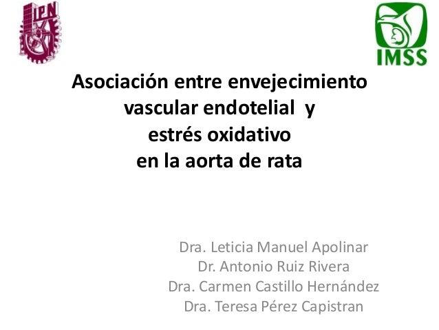Asociación entre envejecimiento vascular endotelial y estrés oxidativo en la aorta de rata Dra. Leticia Manuel Apolinar Dr...