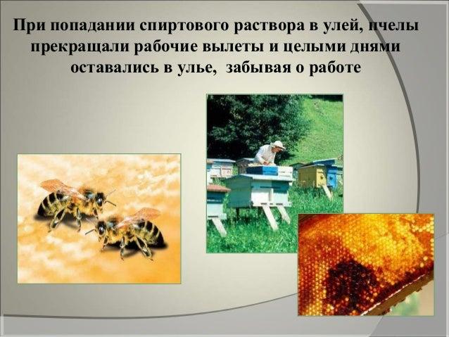 В организме алкоголь оказывает четыре основныхВ организме алкоголь оказывает четыре основных эффекта:эффекта: -обеспечивае...