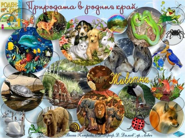 Животинският свят, с който ни е дарила природата е много разнообразен.
