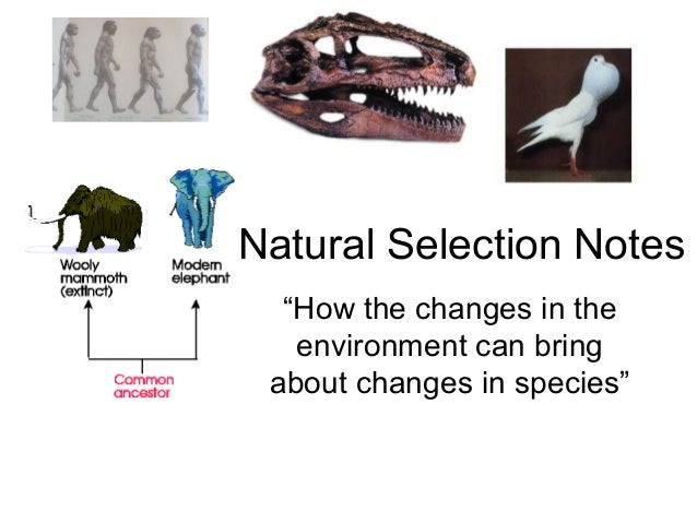 Explain Natural And Artificial Selection