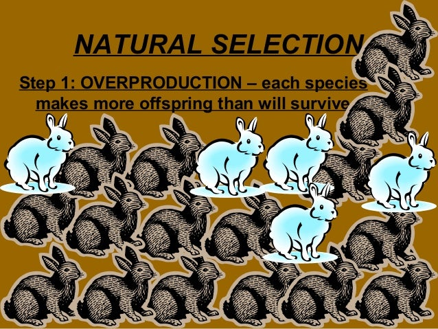 Overproduction Of Offspring Natural Selection