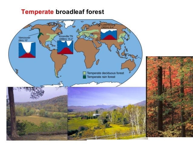 temperate broadleaf forest definition