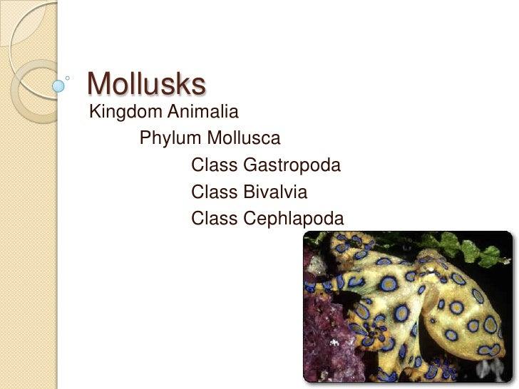 Mollusks<br />Kingdom Animalia<br />Phylum Mollusca<br />Class Gastropoda<br />Class Bivalvia<br />Class Cephlapoda<br />