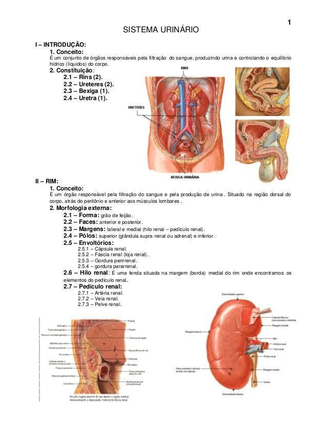 1                                      SISTEMA URINÁRIOI – INTRODUÇÃO:      1. Conceito:     É um conjunto de órgãos respo...