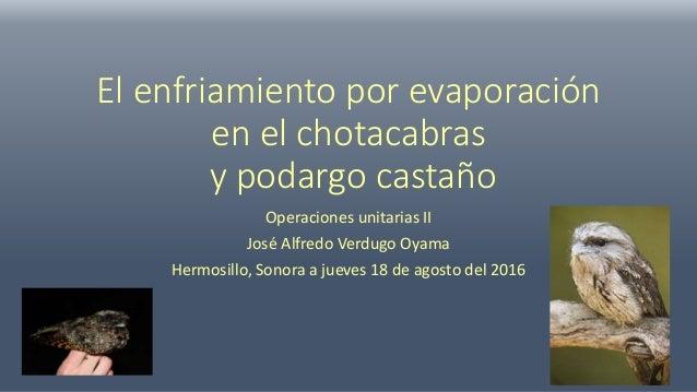 El enfriamiento por evaporación en el chotacabras y podargo castaño Operaciones unitarias II José Alfredo Verdugo Oyama He...