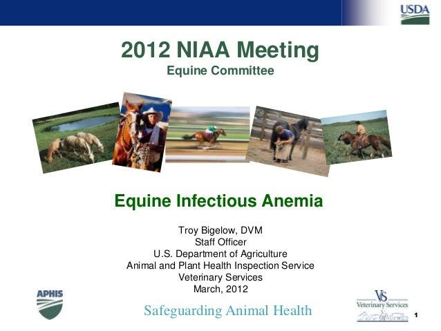 Safeguarding Animal Health 2012 NIAA Meeting Equine Committee Troy Bigelow, DVM Staff Officer U.S. Department of Agricultu...