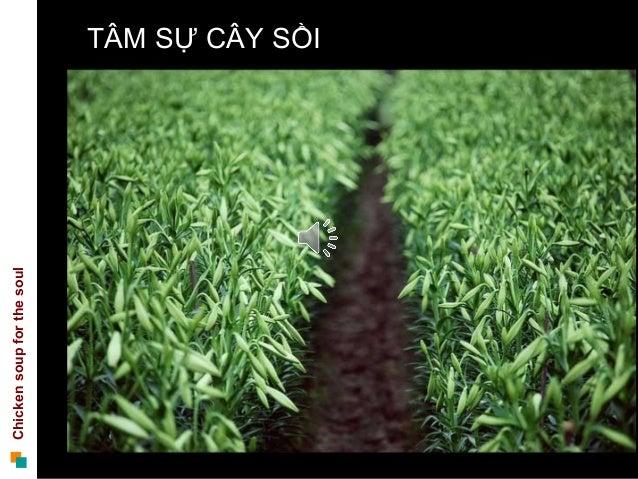 Chickensoupforthesoul ThuongHL TÂM SỰ CÂY SỒI