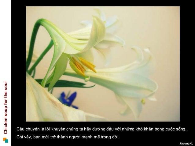 Chickensoupforthesoul ThuongHL Câu chuyện là lời khuyên chúng ta hãy đương đầu với những khó khăn trong cuộc sống. Chỉ vậy...