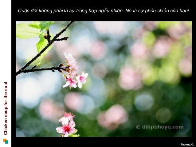 Chickensoupforthesoul ThuongHL Cuộc đời không phải là sự trùng hợp ngẫu nhiên. Nó là sự phản chiếu của bạn!