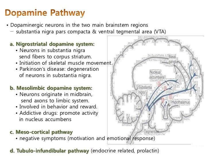 마더리스크라운드 - Dopamine transporter in ADHD & Alcohol intake Adhd And Limbic System