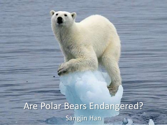 why polar stuff animals usually are endangered