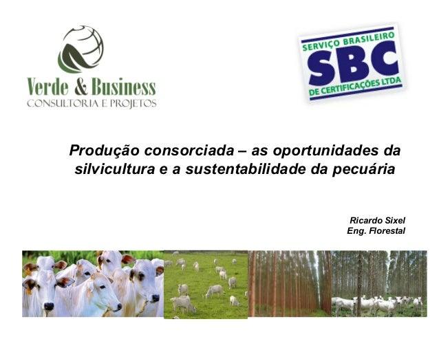 Produção consorciada – as oportunidades da silvicultura e a sustentabilidade da pecuária                                  ...