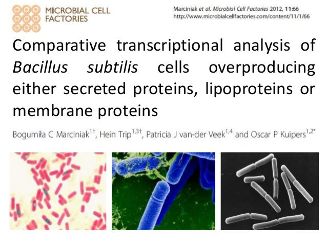 Comparative transcriptional analysis ofBacillus subtilis cells overproducingeither secreted proteins, lipoproteins ormembr...
