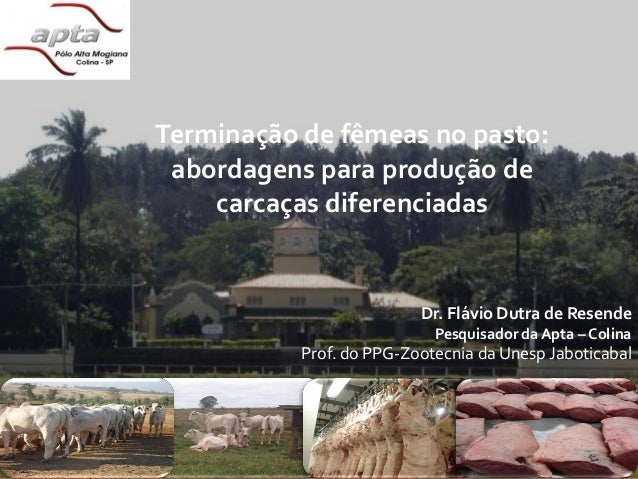 Pecuária do futuro???                 Terminação de fêmeas no pasto:                  abordagens para produção de         ...