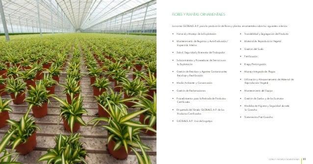Flores y plantas ornamentales for 6 plantas ornamentales