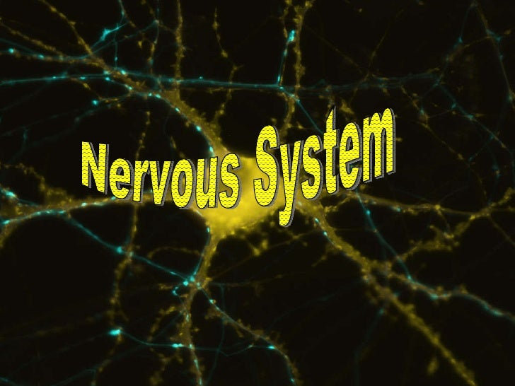 Nervous System Nervous System