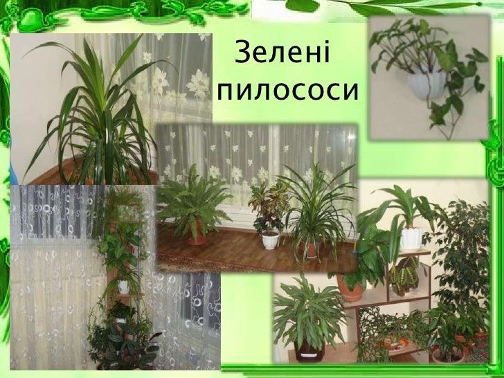 Зеленіпилососи