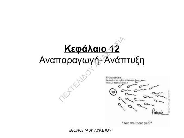 Κεφάλαιο 12 Αναπαραγωγή- Ανάπτυξη ΒΙΟΛΟΓΙΑ Α' ΛΥΚΕΙΟΥ Π ΕΧΤΕΛΙΔΟ Υ ΑΝ ΑΣΤΑΣΙΑ