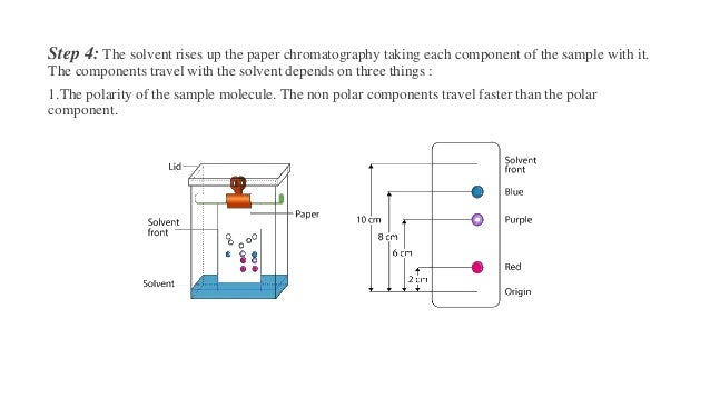Step 4: The solvent rises up the paper chromatography taking each component of the sample with it. The components travel w...