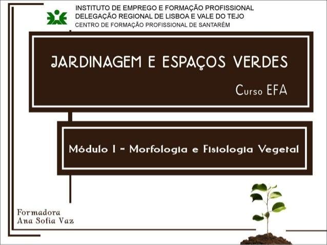 ÓRGÃOS DAS PLANTAS E SUA FISIOLOGIA RAIZ CAULE FOLHA FLOR FRUTO Uma planta completa é composta por: Mod. I raíz