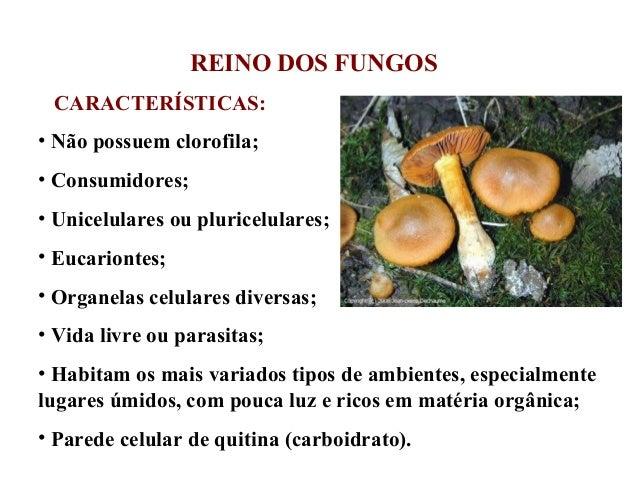 REINO DOS FUNGOS CARACTERÍSTICAS: • Não possuem clorofila; • Consumidores; • Unicelulares ou pluricelulares; • Eucariontes...