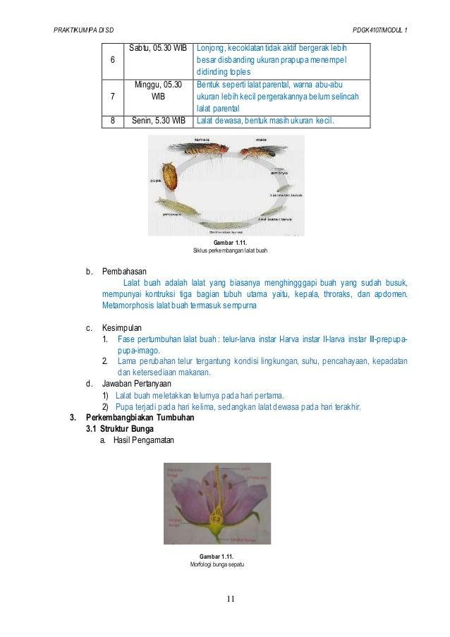 Laporan Praktikum Ipa Modul 1 Simbiosis Seputar Laporan
