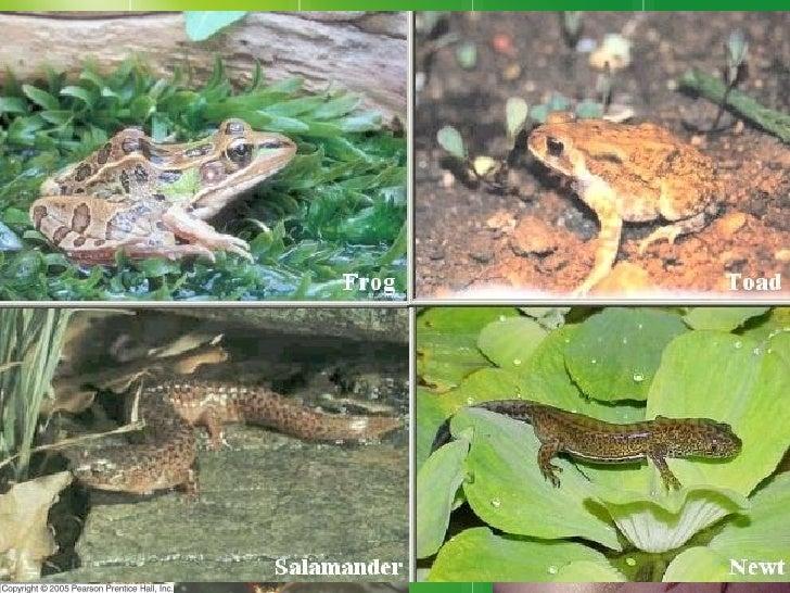 12 3 Amphibians